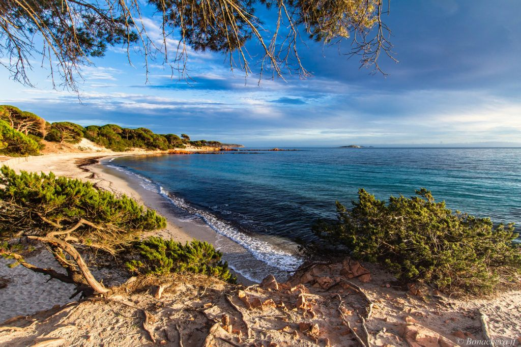 Palombaggia-plage-Corse