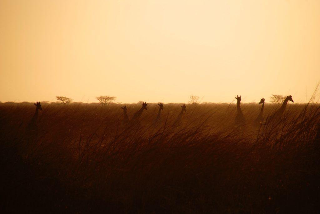 reserve-afrique-du-sud