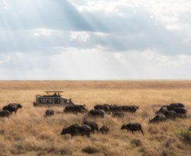 tanzanie-safari
