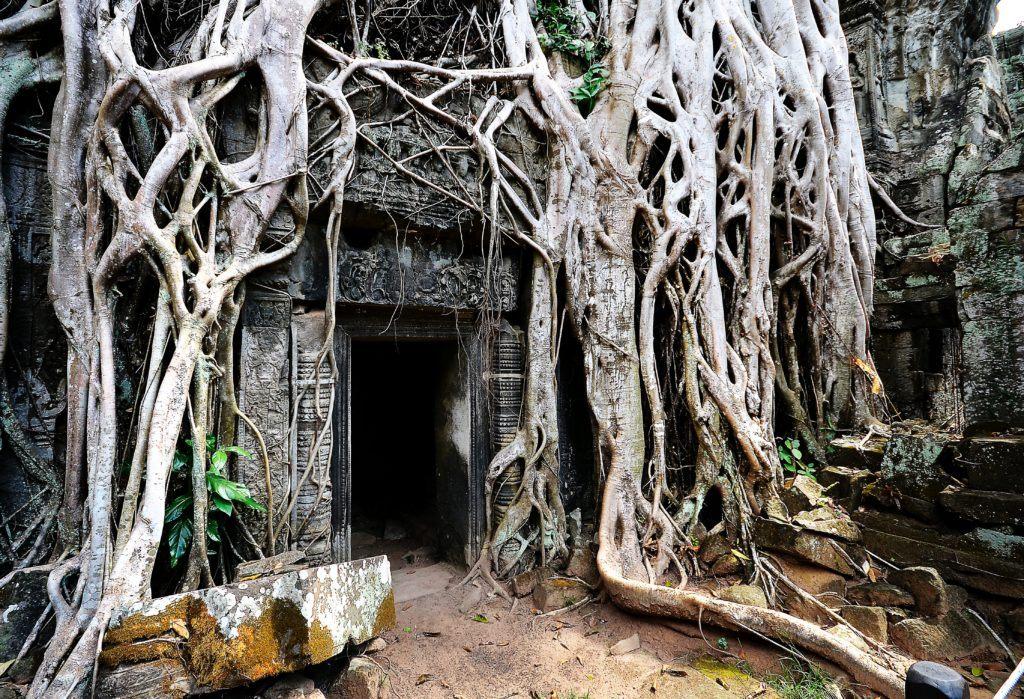 temple-cambodge-ta-prohm