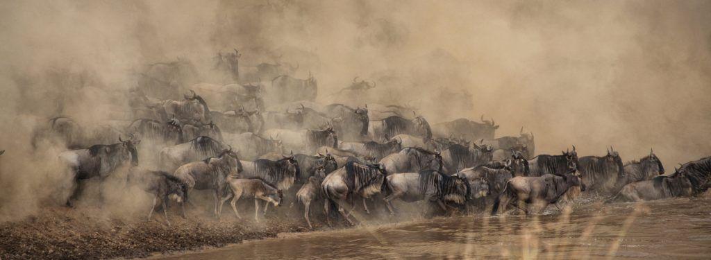 migration-gnous-tanzanie-safari