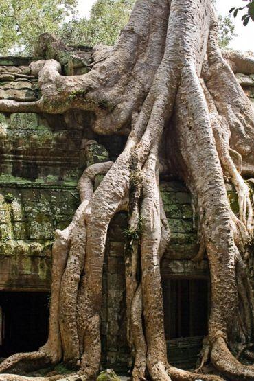 ta-prohm-cambodia-angkor