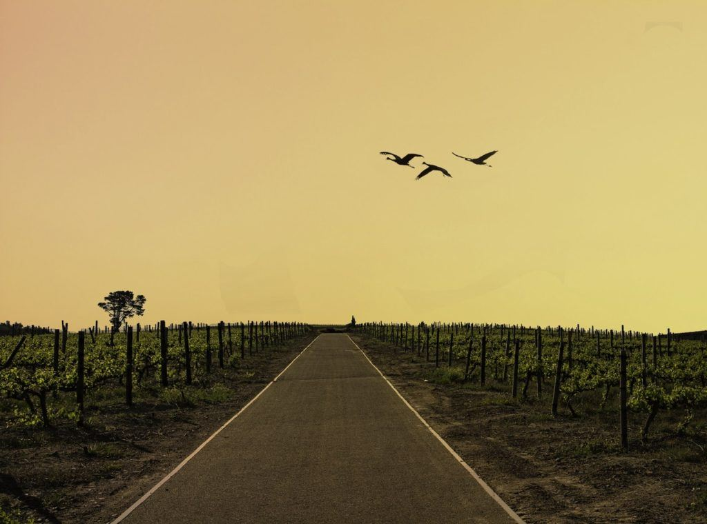 Vignobles incontournables Afrique du Sud
