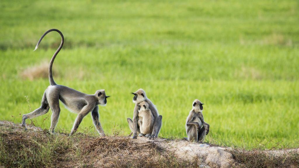 Le Parc Udawalawe au Sri Lanka